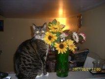 dax flowers